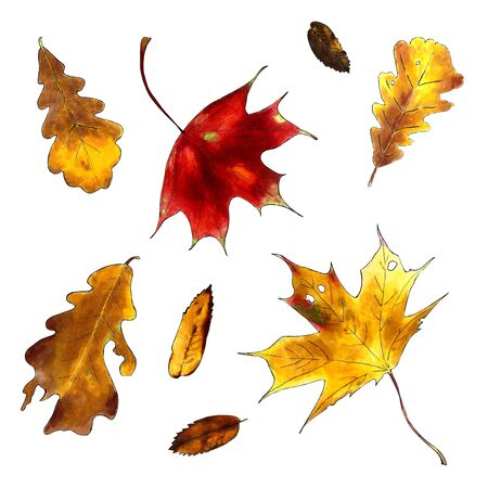 Set of autumn leaves on white background. Hand draw illustration Stok Fotoğraf
