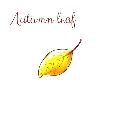 Autumn leaf on white background. Hand draw illustration