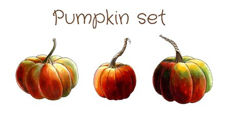 Set of pumpkins on white background Hand draw illustration