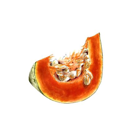 Pumpkin piece. Hand draw illustration on white background.