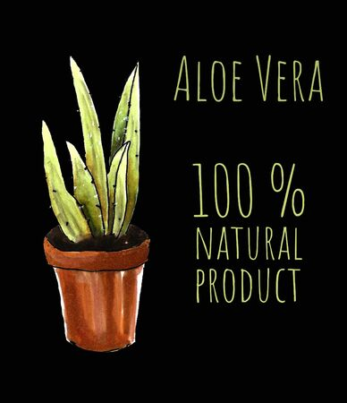 Aloe vera in the pot on black background