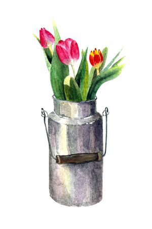 Tulips in a can on white background. Watercolor illustration