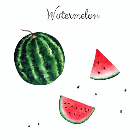 Bright watermelon on white background. Watercolor illustration