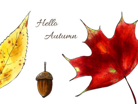 Autumn illustration with leaves and acron on white background. Hand draw illustration