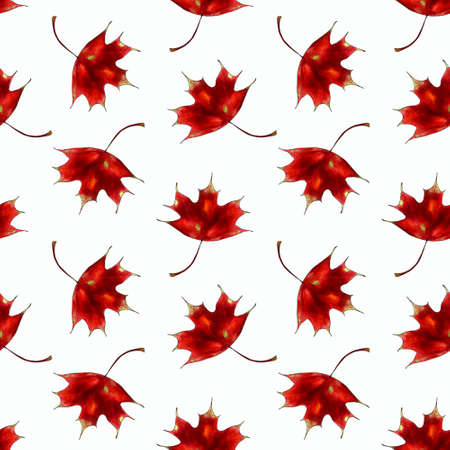 Seamless pattern with red maple leaves on white background Hand draw illustration.