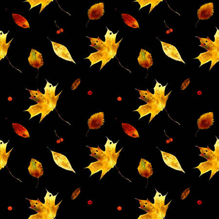 Seamless pattern with autumn leaves on black background Hand draw illustration.