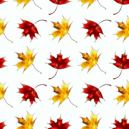 Seamless pattern with maple leaves on white background Hand draw illustration. 版權商用圖片