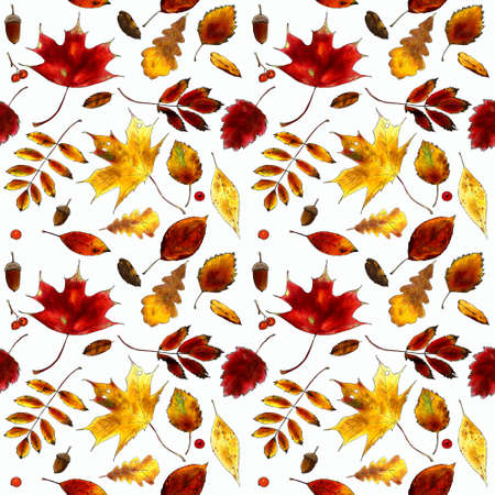 Seamless pattern with autumn leaves, berries, acorns on white background. Hand draw illustration.