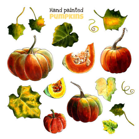 Set of pumpkins with leaves on white background. Hand draw illustration