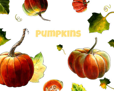 Illustration with pumpkins and leaves on white background Hand draw illustration