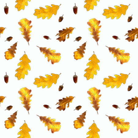 Seamless pattern with oak leaves and acorns on white background. Hand draw illustration.