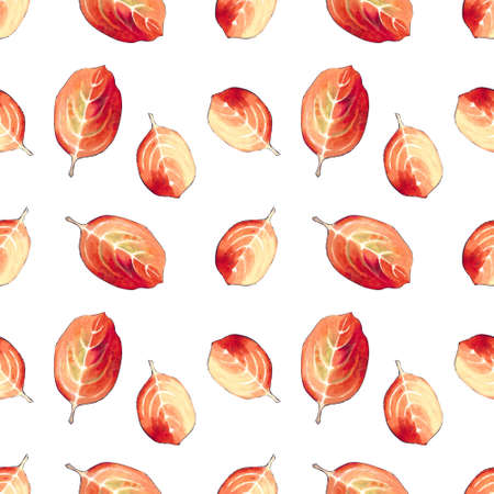 Seamless pattern with red leaves on white background Hand draw illustration. Zdjęcie Seryjne