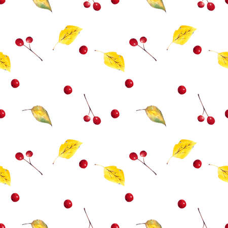 Seamless pattern with autumn leaves and berries on white background. Watercolor illustration. Zdjęcie Seryjne