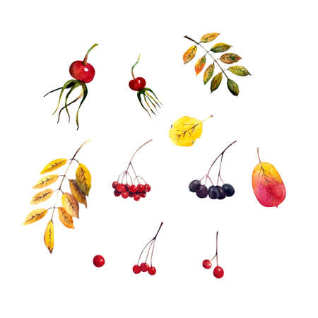 Set of autumn leaves and berries. Watercolor illustration