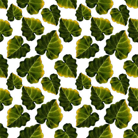 Seamless pattern with leaves on white background. Hand draw illustration.