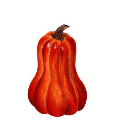 Orange pumpkin on white background. Hand drawn illustration 写真素材