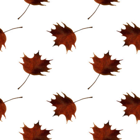 Seamless pattern with maple leaves on white background. Watercolor illustration.