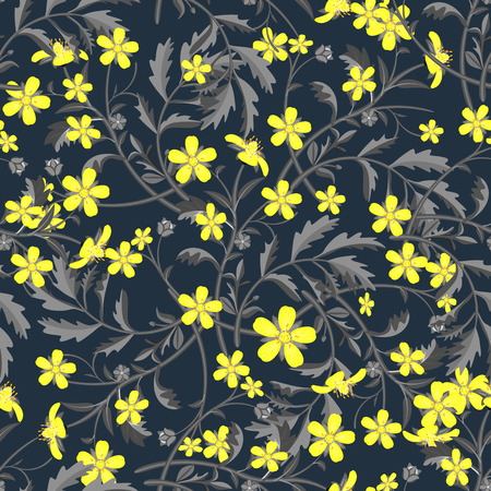 buttercup  decorative: Seamless pattern with yellow wildflowers  on black background.  Vector illustration.