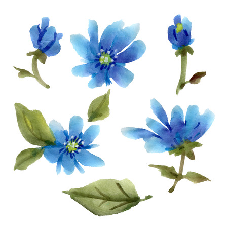 Blue watercolor flowers isolated on a white background.