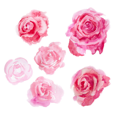 buds: Red  roses  isolated on a white background. Watercolor illustration.
