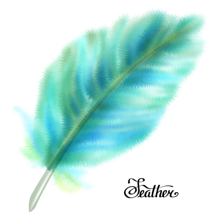 feathery: Blue and green fluffy feather isolated on white background. Vector illustration.