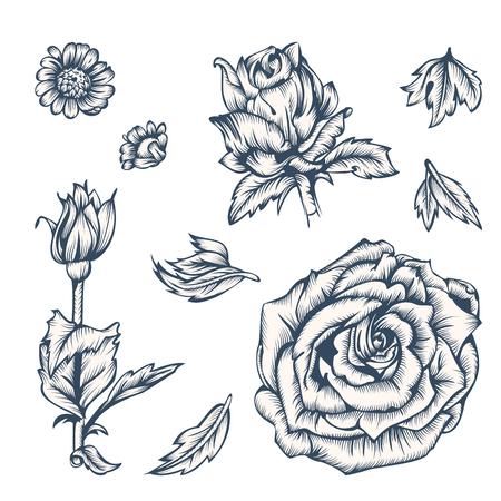 rosas negras: elementos de flores en blanco y negro para el diseño. Tinta en el estilo de grabado antiguo. Estilo vintage. Ilustración del vector.
