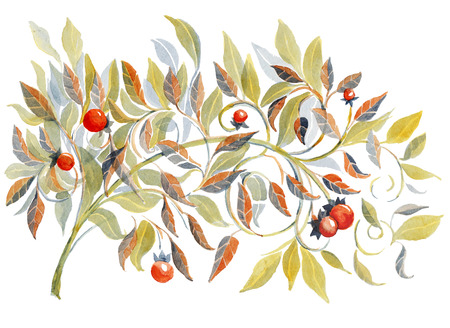 red berries: Watercolor illustration of branch with leaves and  red berries, isolated on white background.  Hand-drawn illustration.