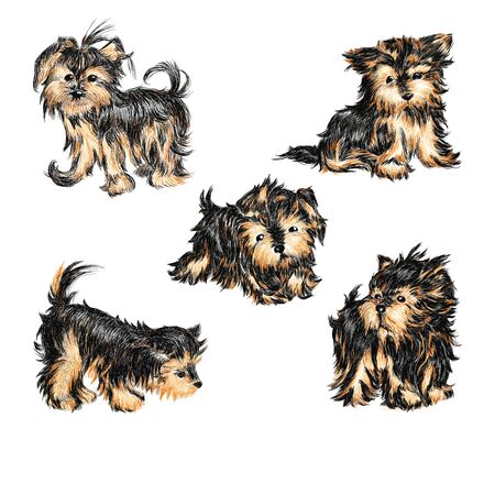 Vector set - puppies of breed a Yorkshire terrier.  Hand-drawn illustration.