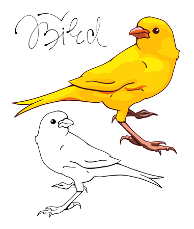 De gele Canarische. Monochrome en kleurversie. Handgetekende illustratie. Vector. Stock Illustratie