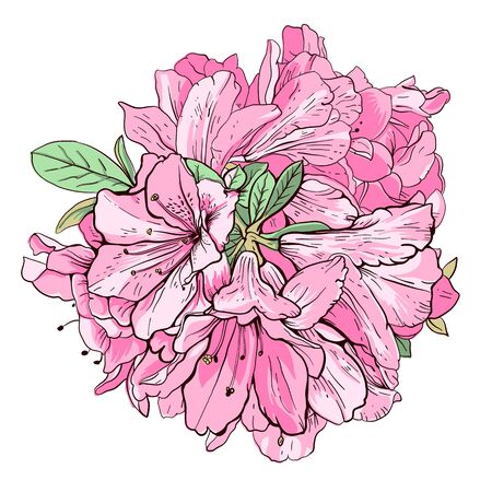 gently: Pink flowers  isolated on a white background.  Hand-drawn illustration. Vector