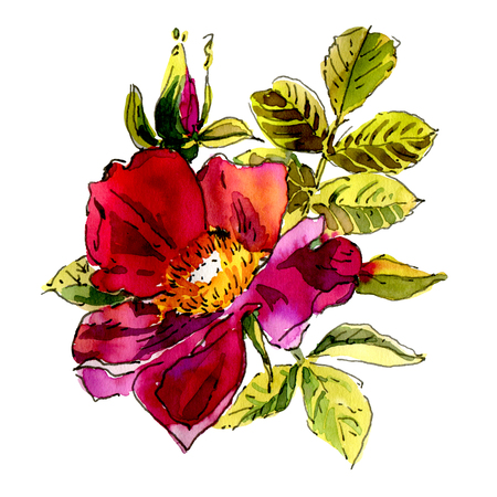 Watercolor flowers isolated on a white background. Dog rose. Hand-drawn illustration. Stock Photo