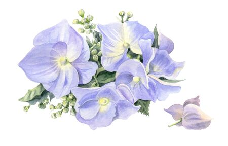 Lilac hydrangeas. Watercolor flowers isolated on a white background. Hand-drawn illustration. Stock Photo