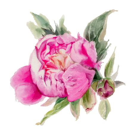 Watercolor flowers isolated on a white background. Peonies. Hand-drawn illustration.