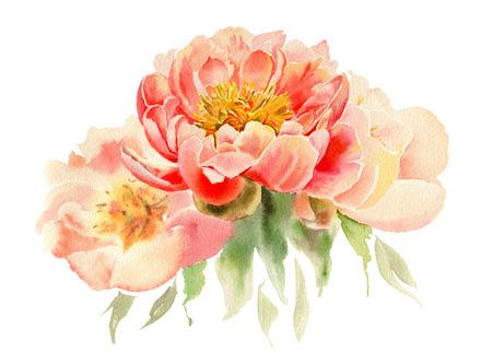 Fiori dell'acquerello isolati su sfondo bianco. Peonie rosa. Illustrazione disegnata a mano.
