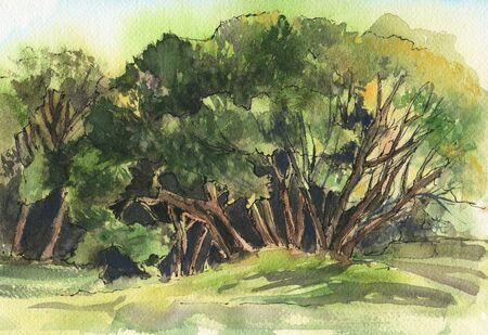 Summer landscape with trees. Watercolor. Hand-drawn illustration.