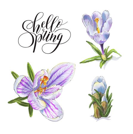 Spring  flowers isolated on a white background. Crocuses.  Drawing with markers. Hand-drawn illustration.