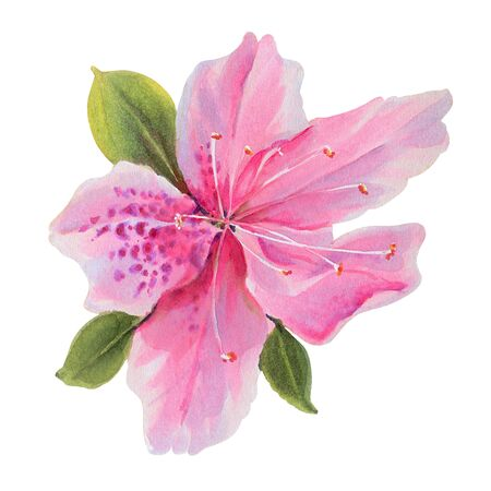 Flowers isolated on a white background. Rhododendrons.  Hand-drawn illustration.  Drawing with markers
