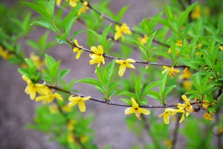 Small yellow flowers blooming on a few vines stock photo picture small yellow flowers blooming on a few vines stock photo picture and royalty free image image 27602051 mightylinksfo