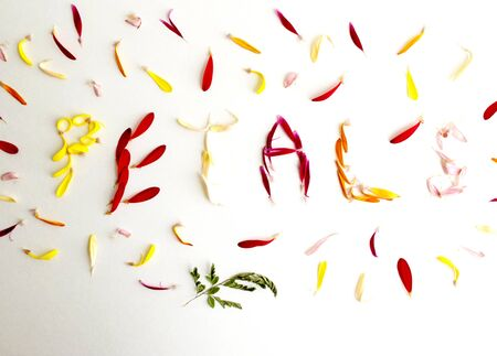 The word petals spelled with multicolored flower petals on a white background.