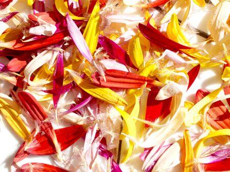 Closeup of multicolored flower petals Stock fotó