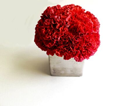 Pink Carnations in a silver vase on white background