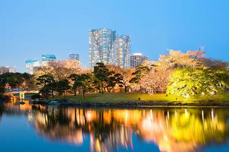 honshu: Cherry blossom at Hamarikyu (also Hama Rikyu)  Gardens, Chuo Ward, Tokyo, Kanto Region, Honshu, Japan