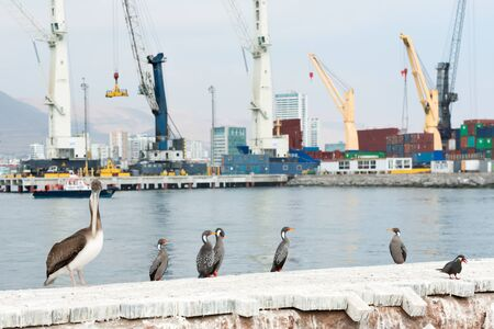 autochthonous: Tower cranes at the port of Iquique with autochthonous wild birds in the foreground, Iquique, Chile Stock Photo