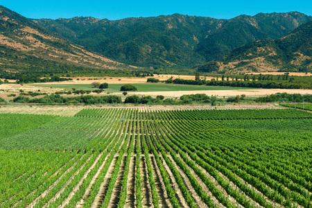 Panoramablick auf einen Weinberg im Colchagua-Tal, Chile