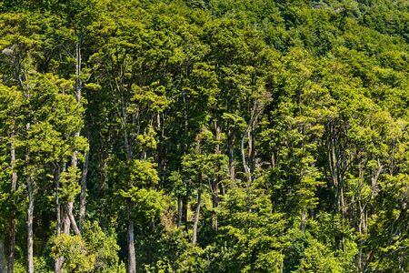 A forest in the shores of Lake Todos Los Santos, Southern Chile Reklamní fotografie