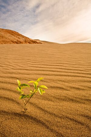 Conceptual image of little plant growing in the desert
