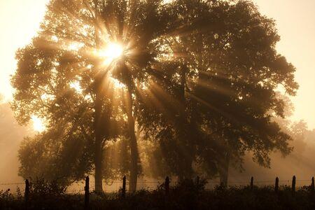 Sunrise at a farm in Villarrica, Pucon, Araucania Region, Chile, South America