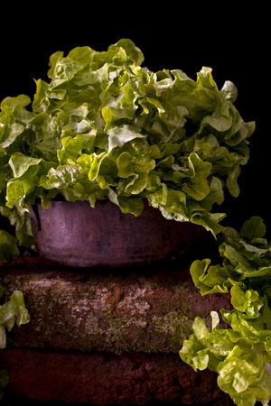Lettuce on a bowl against a black background