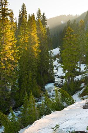 Paradise River at Mount Rainier National Park, Washington State, USA Stock Photo