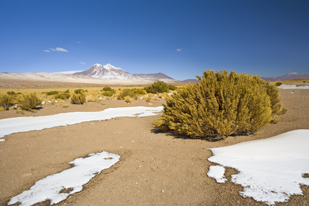 Miniques hill in the Altiplano, Atacama desert, Antofagasta Region, Chile, South America